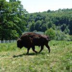 Un loc din Romania, in Top 100 destinatii turistice. Este alaturi de Parcul Yellowstone din SUA